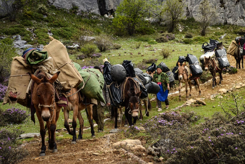 page-caravane-liotard-chevaux-diapo-uai-