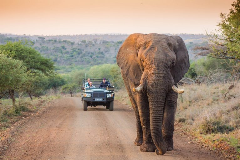 Game-drive-vehicle-behind-an-elephant