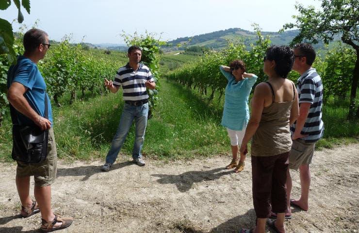 Visite d'une cave à vins