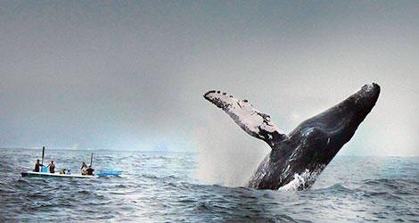 ballenas-observacion-ecuador-01