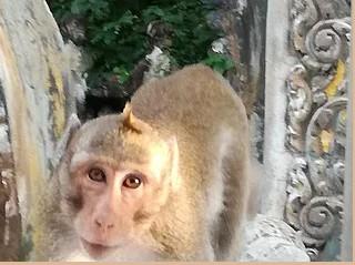 Rencontre avec les singes malicieux