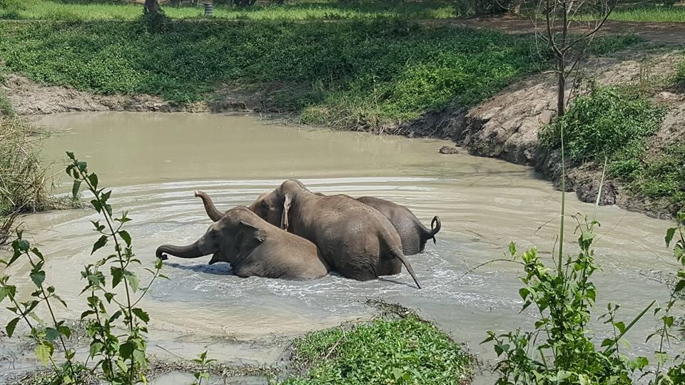 Camp d'éléphants