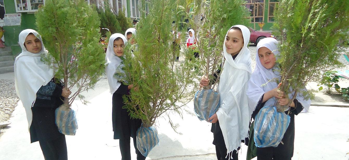 Donation of Plants
