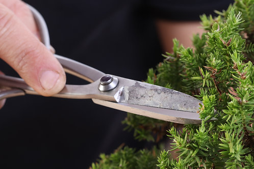 Bonsai Design and Open class - Material to Bonsai 19 July 2020