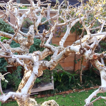 Prepare Your Deciduous Trees for Spring: Pruning