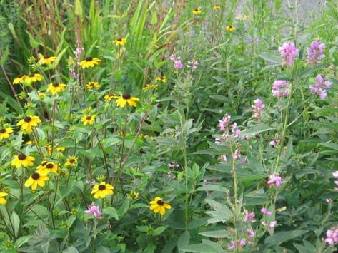 Go Native LI Hosts Invasive Plant Clean-up in Greenlawn, Huntington (5/19)