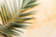 yellow palm leaf.jpg