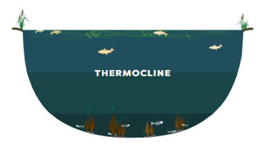thermocline in pond