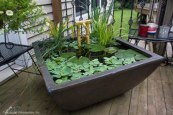 patio-pond5 (1).jpg
