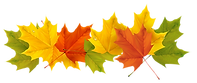 autumn-leaves-clip-art-17.png