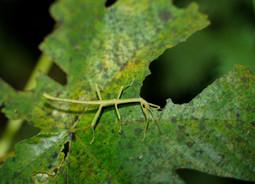 Snapshots of El Yunque Fauna