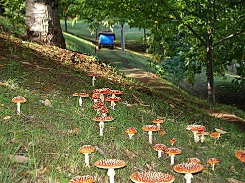 Fungi beneath chestnut trees