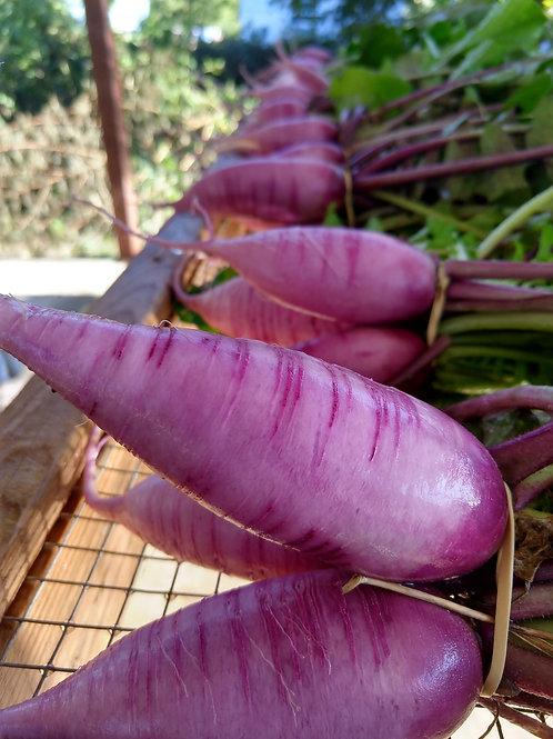 Purple Daikon Radish, 1lb bag