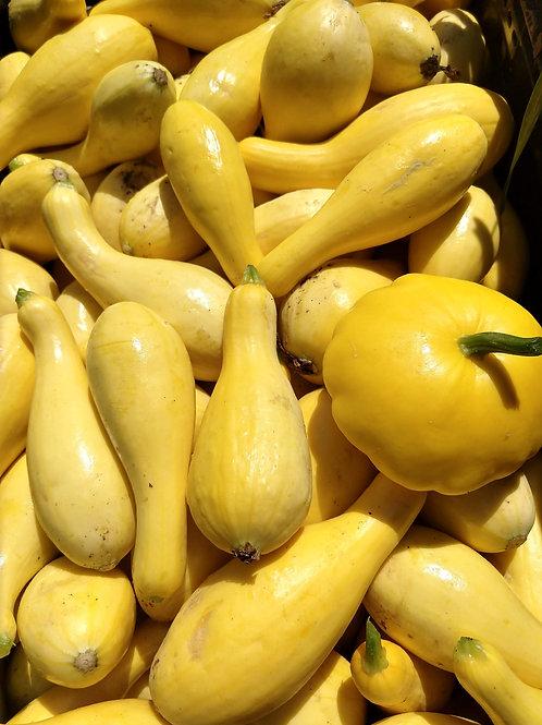 Yellow Summer Squash, TX, 2lb. bag