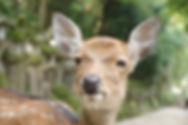 deer-539038_1920.jpg