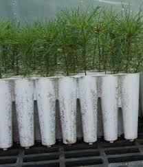 Free Seedlings for Cheatham Landowners