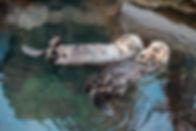 relaxed-1143733_1920.jpg