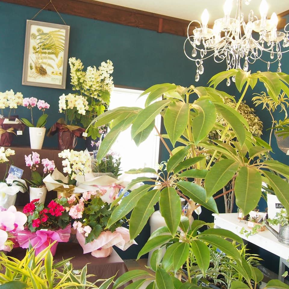 ジベルニーガーデンの観葉植物