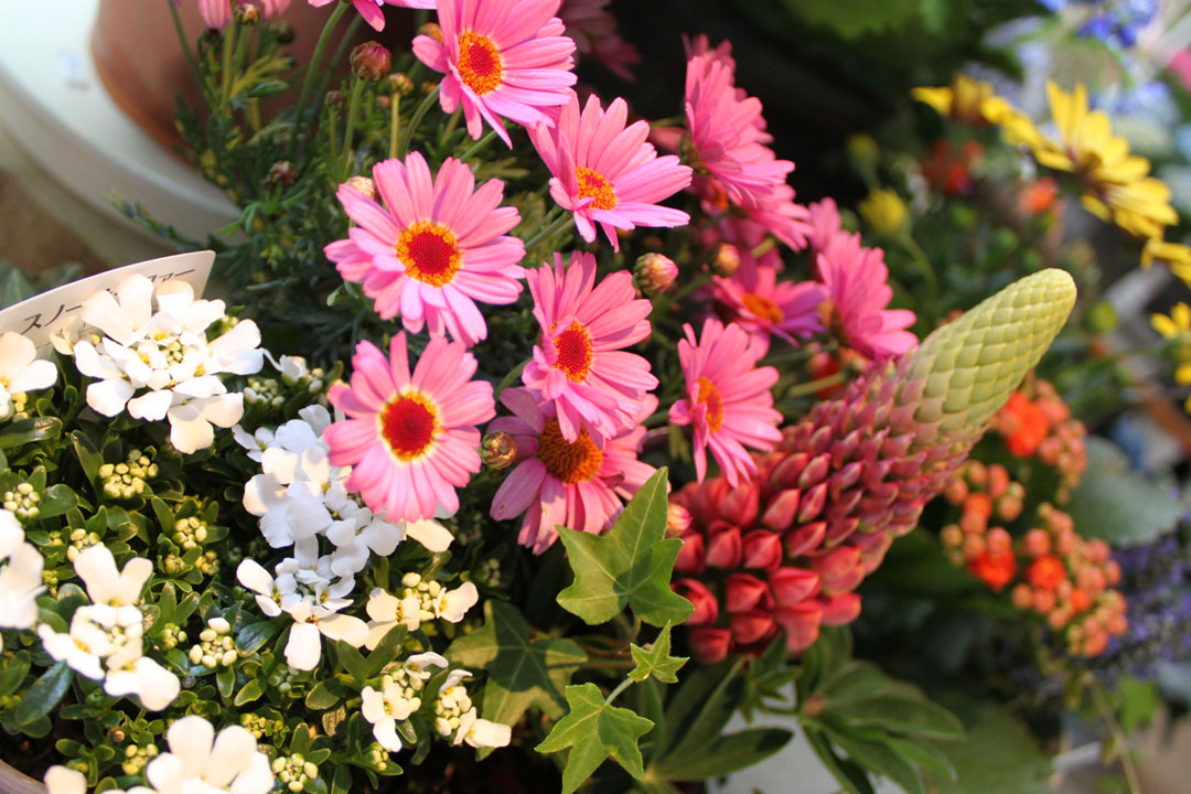 季節を彩る花々