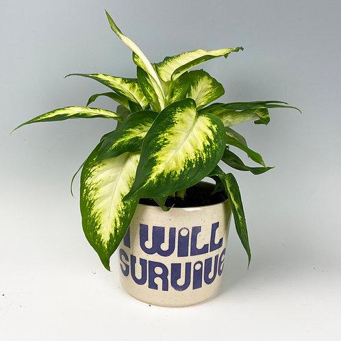 'I Will Survive' Planter