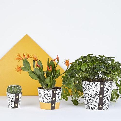 Plant Pot Cover - Spores