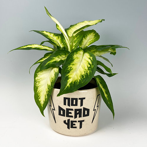 'Not Dead Yet' Planter