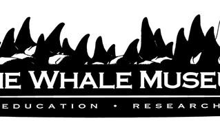 Saracens Adopt 2 Orcas
