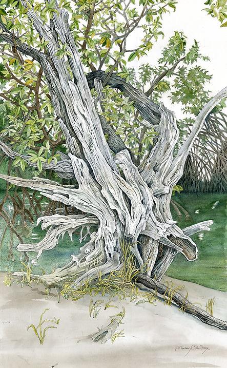 TreeAtRotaryPark.jpg