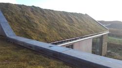 Coplands grass roof