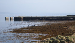 Seals and pier