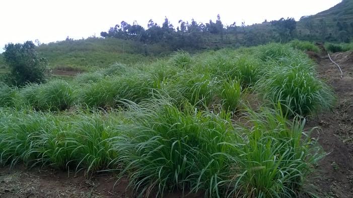 Elamulla Farm 04.jpg