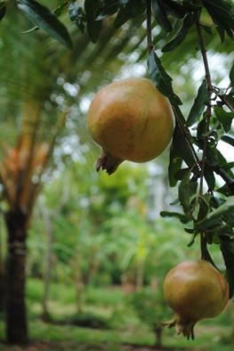 Naula Farm 09.JPG