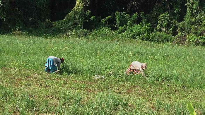 Pahalawela Farm 08.jpg