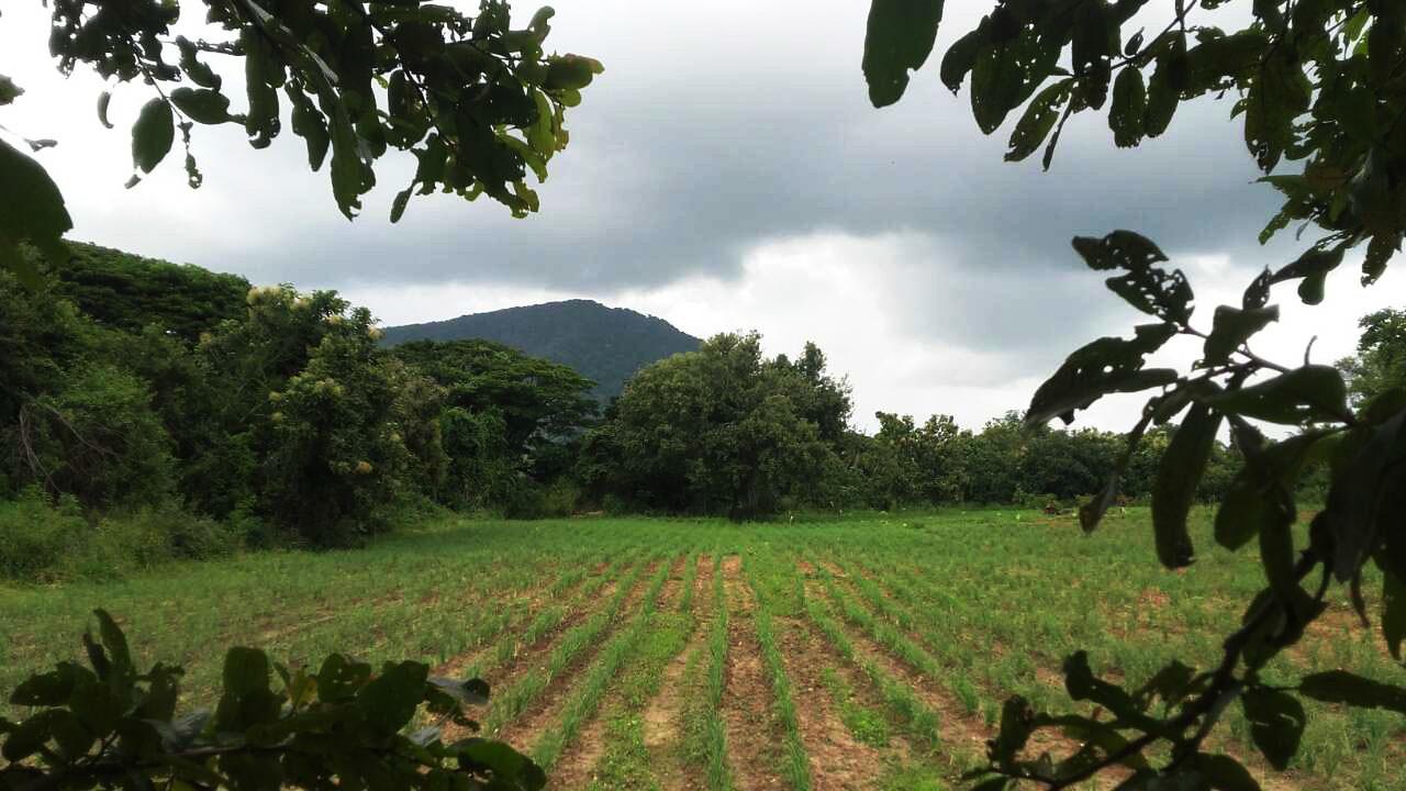 Pahalawela Farm 07.jpg