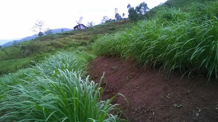 Elamulla Farm 05.jpg