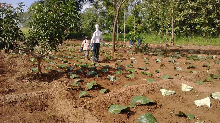 Pahalawela Farm 02.jpg