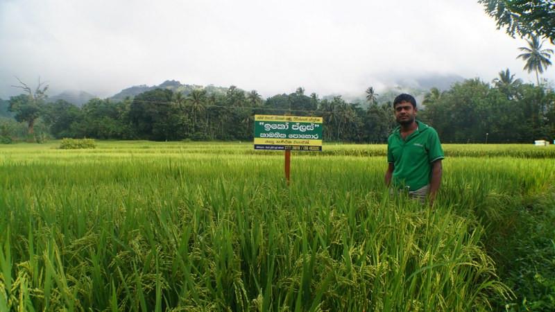 Naula Farm 15.JPG