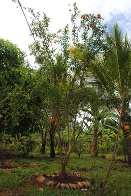 Naula Farm 08.JPG