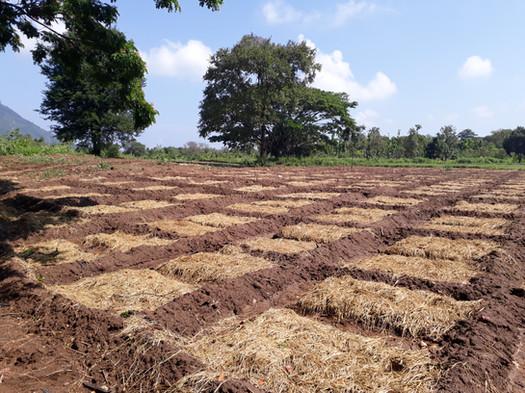 Naula Farm 06.jpg