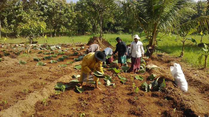 Pahalawela Farm 03.jpg