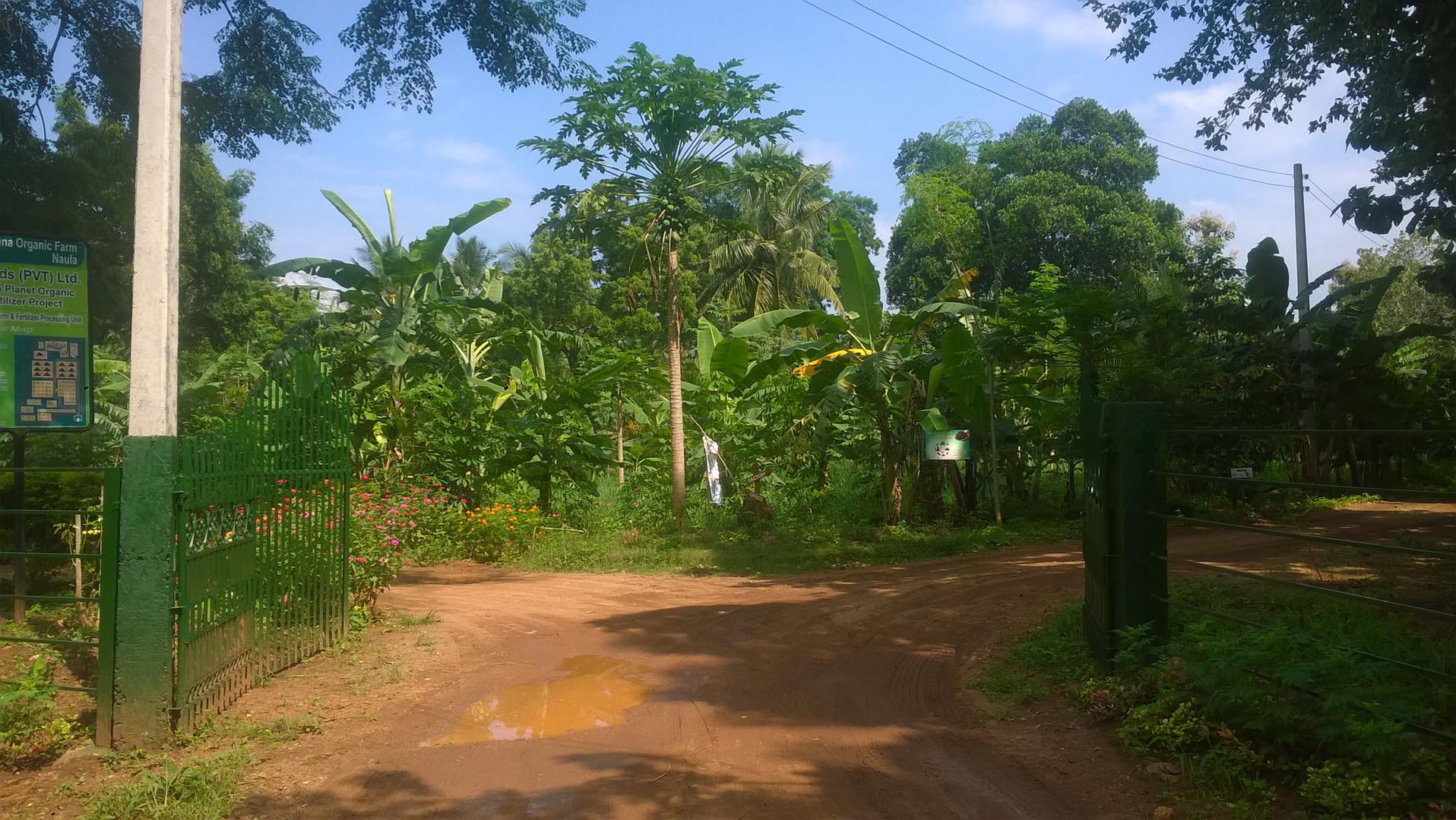 Naula Farm 18.jpg