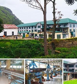 Maha Uva Organic Tea Factory