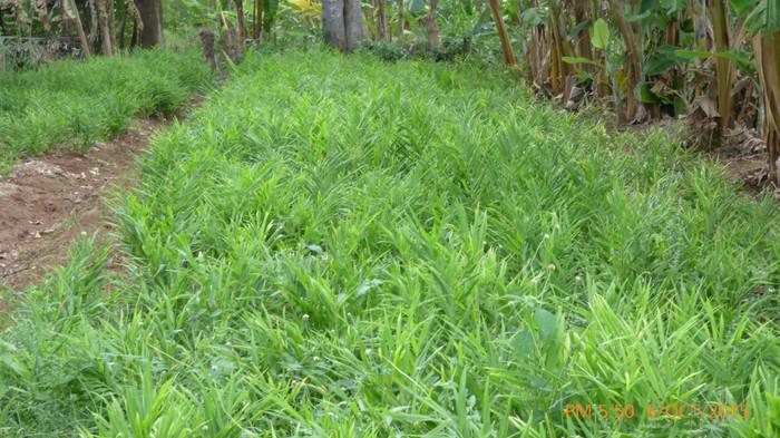 Naula Farm 16.JPG