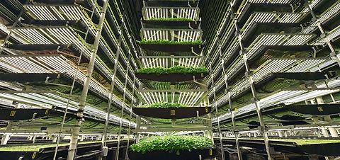 vertical farming 2.jpg