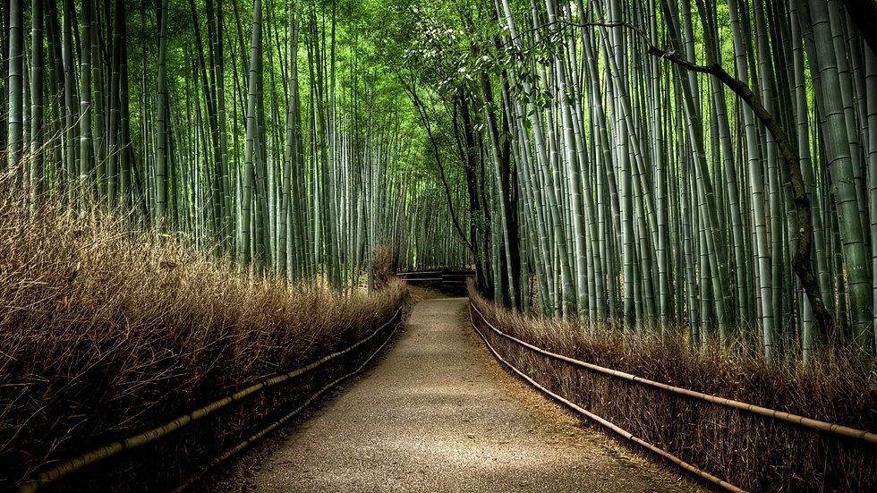 Forêt-de-bambous-à-Sagano-Arashiyama-Jap