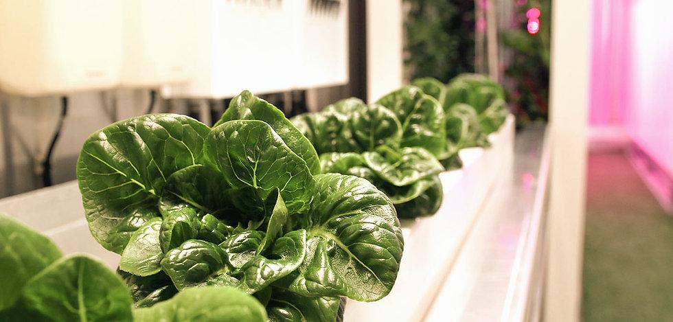 leafy%20greens_edited.jpg