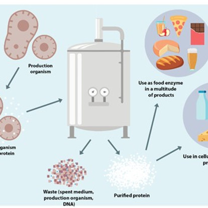 Cellular Agriculture & Fermentation - the Livestock Farms of the Future?