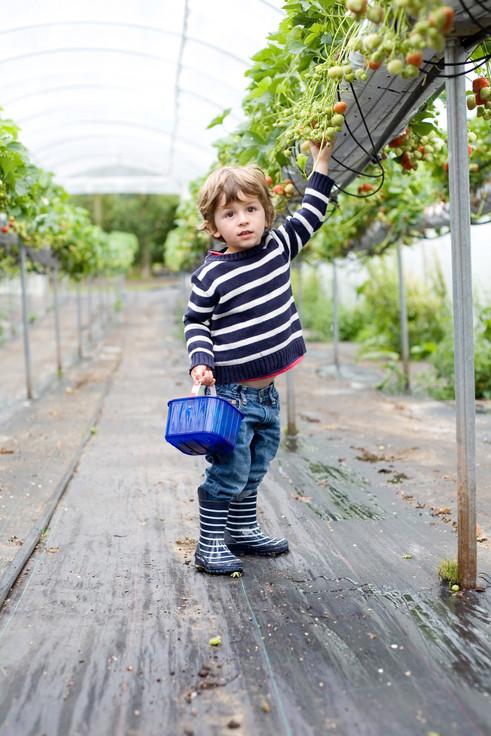 Lowes Fruit Farm