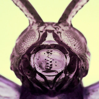 Sofubi(Mothra)