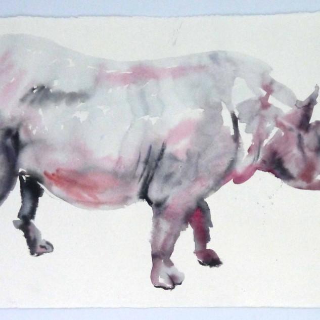 Rhinocerus